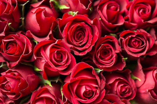 Bouquet de roses - St-Valentin